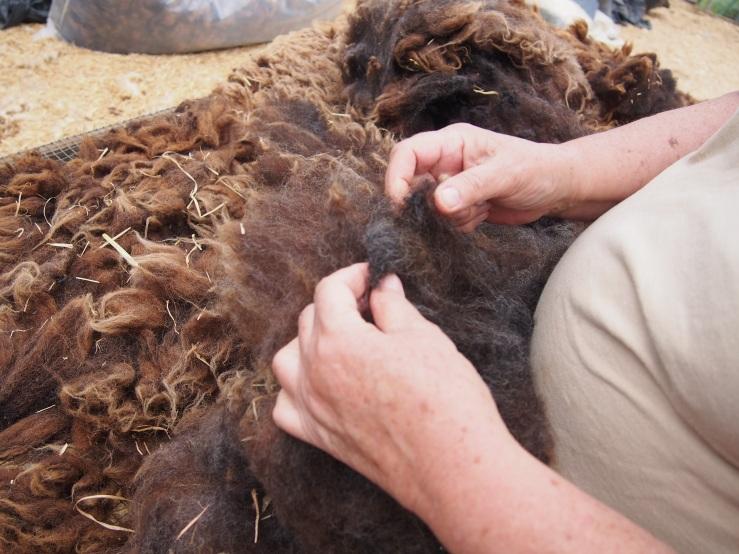 grading wool